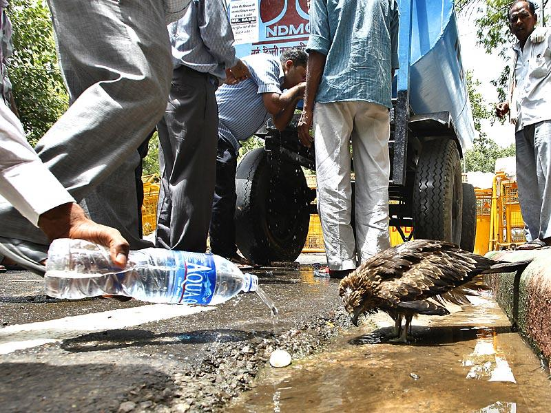 Though there are water pots and water holes made for the summer, a number of birds have fallen down mid-flight due to dehydration.(Raj K Raj/HT Photo)