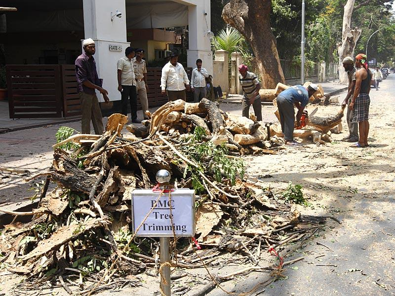 BMC workers cut dead trees on the eve of World Environment Day at Matunga, in Mumbai. (Vijayanand Gupta/HT photo)
