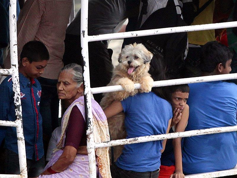 A puppy travels in a boat at Versova, in Mumbai. (Pratham Gokhale/HT photo)