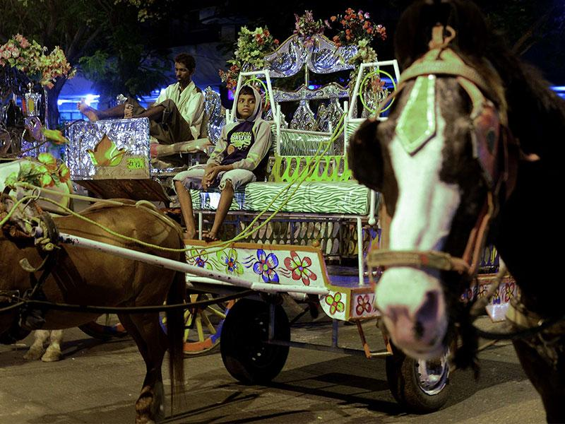 Mumbai's ornate 'Victoria' - horse-drawn carriages are nearing the end of the road after the Bombay high court gave the BMC a year to completely ban all horse-drawn carriages observing that they were illegal.