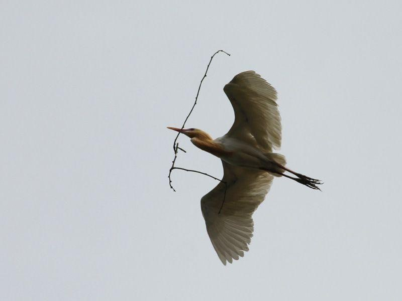 A bird collect twigs and hey to build a nest at Bathinda (Photo by Sajeev Kumar/HT Photo)