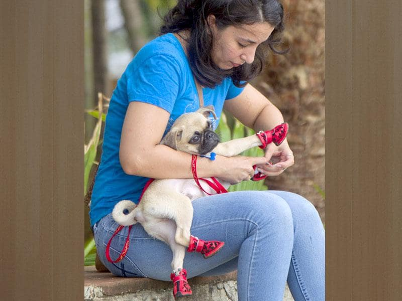 A woman puts on shoes to her dog at Bandra Carter road, in Mumbai.(Satish Bate/HT photo)