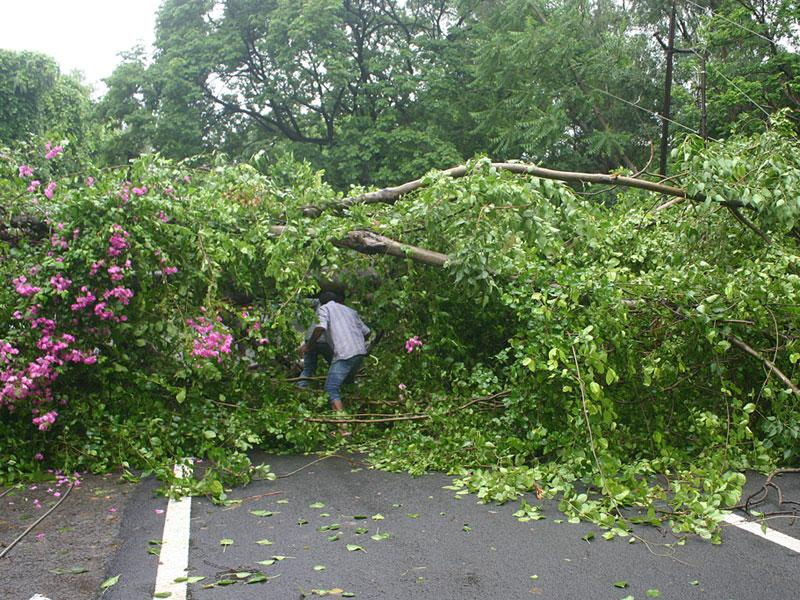 A road was blocked after a tree fell down at Shahapura in Bhopal on Sunday following incessant showers. (Bidesh Manna/HT photo)