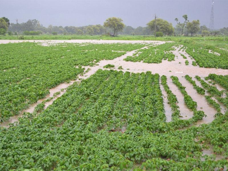 A farm inundated in Shajapur district on Sunday. (HT photo)