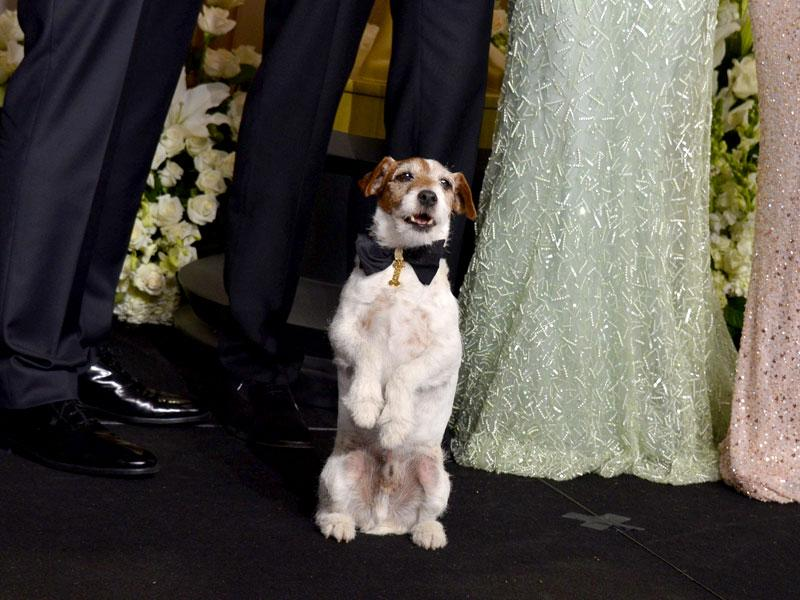 Uggie posing with cast members in the press room at the 84th Annual Academy Awards. (AFP Photo)