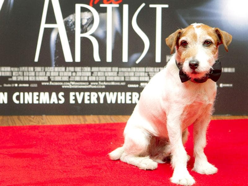"Uggie, the Jack Russell terrier who became a canine star for his scene-stealing role in the Oscar-winning movie ""The Artist,"" was euthanized Friday, Aug. 7, 2015, after a bout with prostate cancer. (AP Photo)"