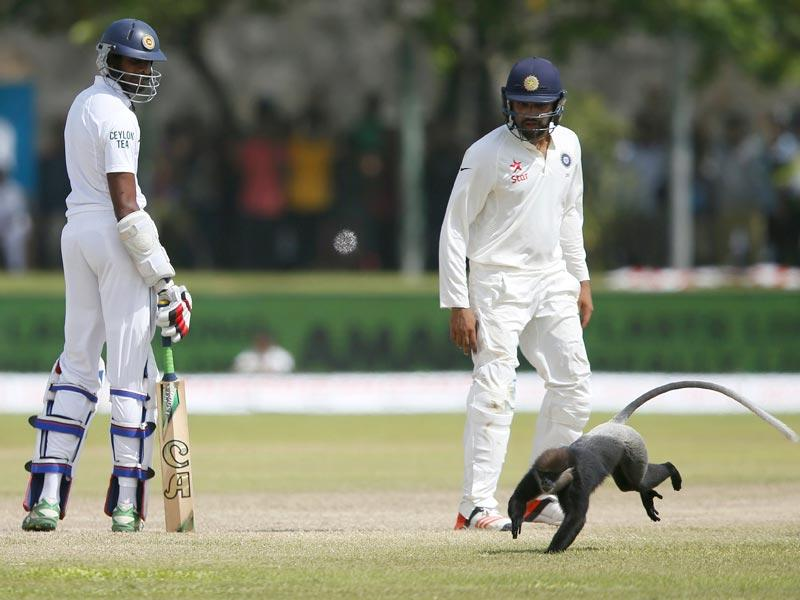 Sri Lanka's Jehan Mubarak, left, and India's Rohit Sharma watch as a monkey runs on to the pitch. (Reuters Photo)