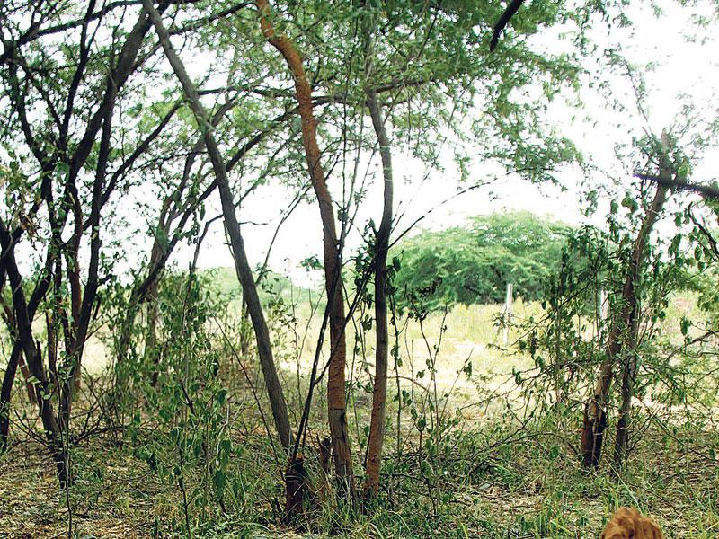 A serious threat looms large on the existence and survival of Aravalli hills