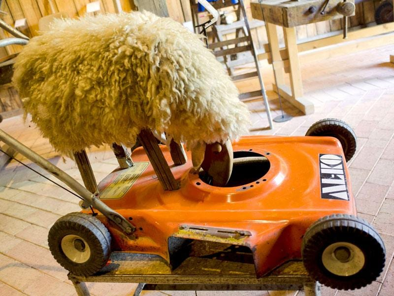 Austria's museum of nonsense and its vast collection of silly yet brilliant inventions has gained a cult following among fans of the absurd. A 'biological' lawn mower is displayed at the 'Nonseum' museum at the Austrian village of Herrnbaumgarten, north of Vienna near the Czech border. (AFP Photo/ Joe Klamar)