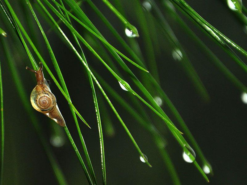 A close-up of a snail on lush green plants after a heavy downpour. (Karun Sharma/HT)