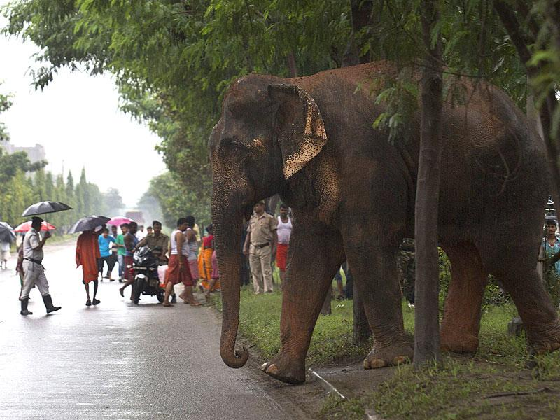 Commuters stop and watch the elephant roaming on the highway. As the pressure of population pushes human habitation closer to forests, incidents of wild animals straying into cities is increasingly reported. (AP Photo)