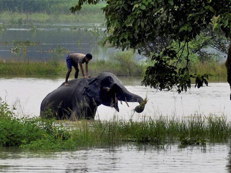 An elephant being bathed in the flooded parts of Pobitora wildlife sanctuary in Morigaon district of Assam on Sunday. (PTI Photo)