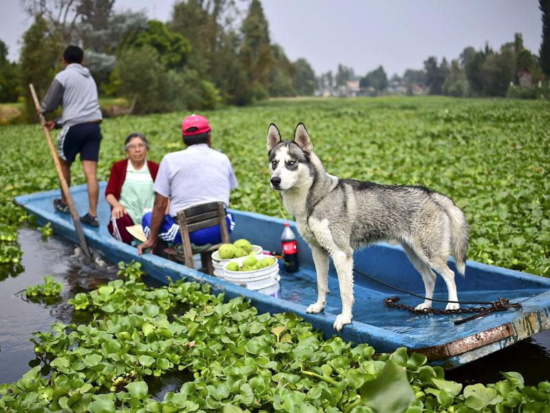 Farmers and their dog seen on a 'trajinera'. (AFP)