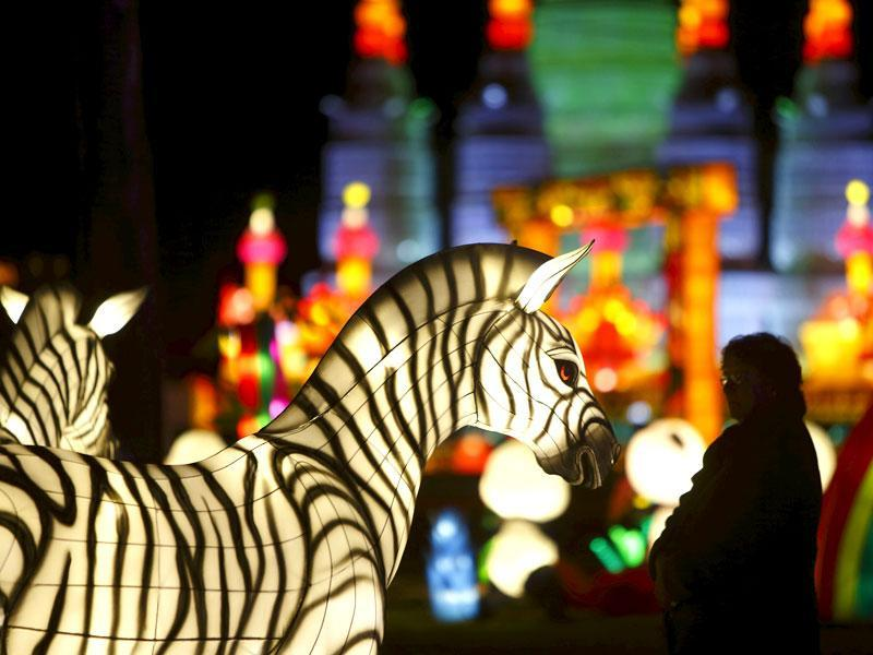 The vibrant light displays, come in all shapes and forms, including Chinese Zodiacs, flowers, insects and animals such as zebras, elephants, pandas and many more. (Reuters)