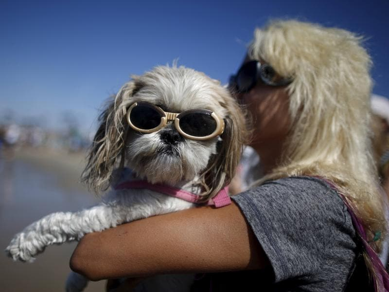 An enthusiast holds her pet wearing sunglasses as she watches other competitors during the Surf Dog Contest. (REUTERS)