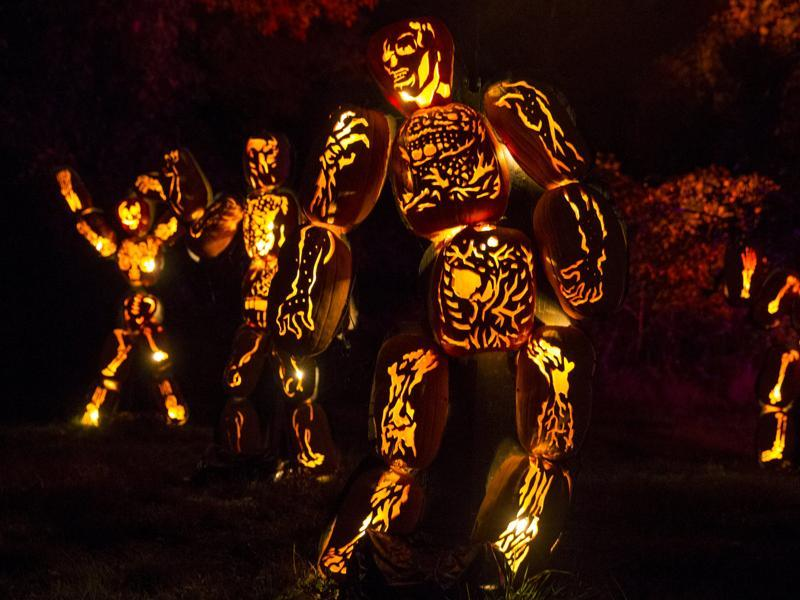 Jack O' Lanterns carved as the skeletons are displayed in Van Cortlandt Manor House and Museum during the Great Jack O' Lantern Blaze in New York, October 27, 2015.  (REUTERS)