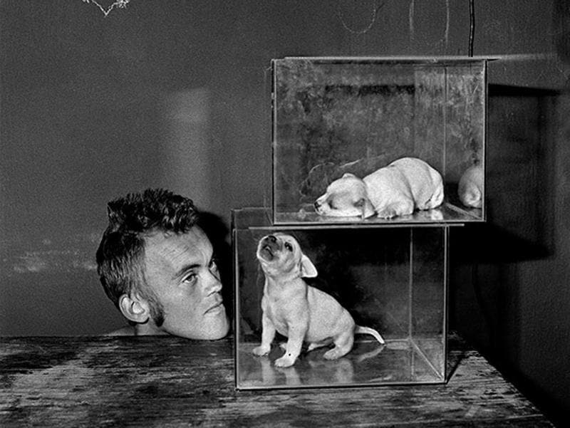 'Puppies Inside Fishtanks' (2000) from the series, Shadow Chamber. (Roger Ballen and PHOTOINK)