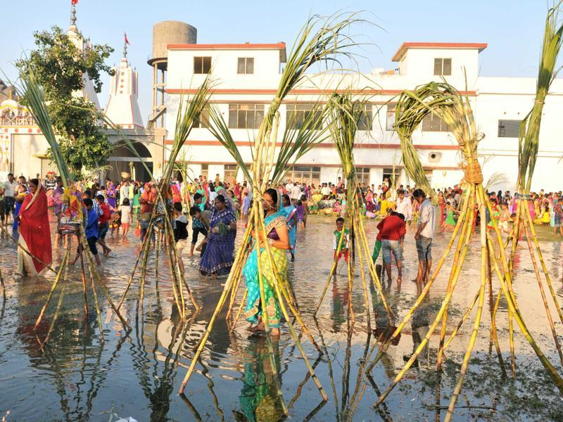 Devotees in Jalandhar perform Chhath rituals by installing sugarcanes in water on Tuesday.  (Pardeep Pandit/HT Photo)