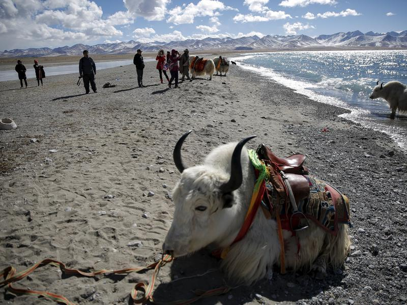 Tourist take pictures of Tibetan people and their yaks as they visit Namtso lake.  (REUTERS)