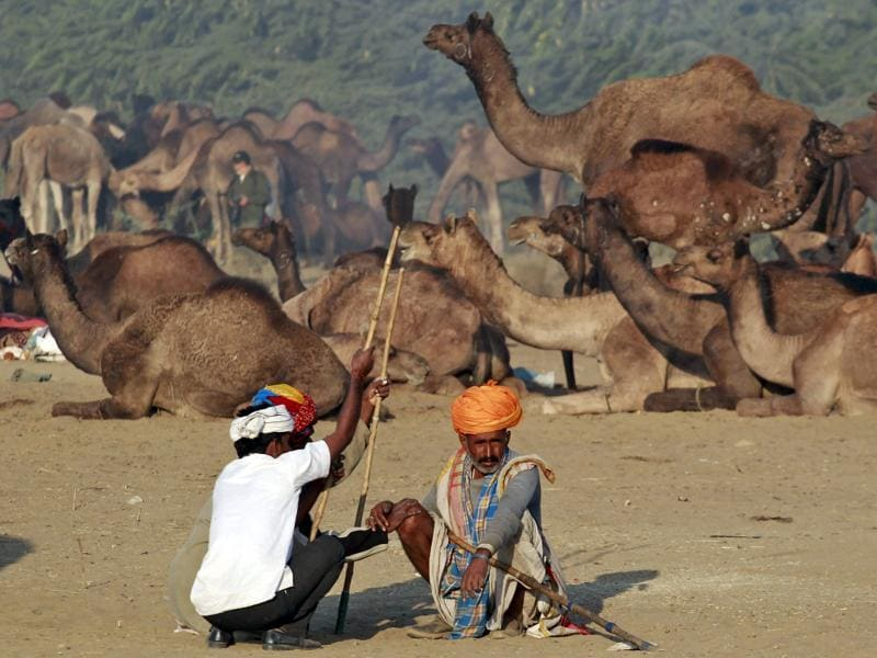 Camel traders wearing traditional headgear rest near their camels at Pushkar Fair in Rajasthan. (REUTERS)