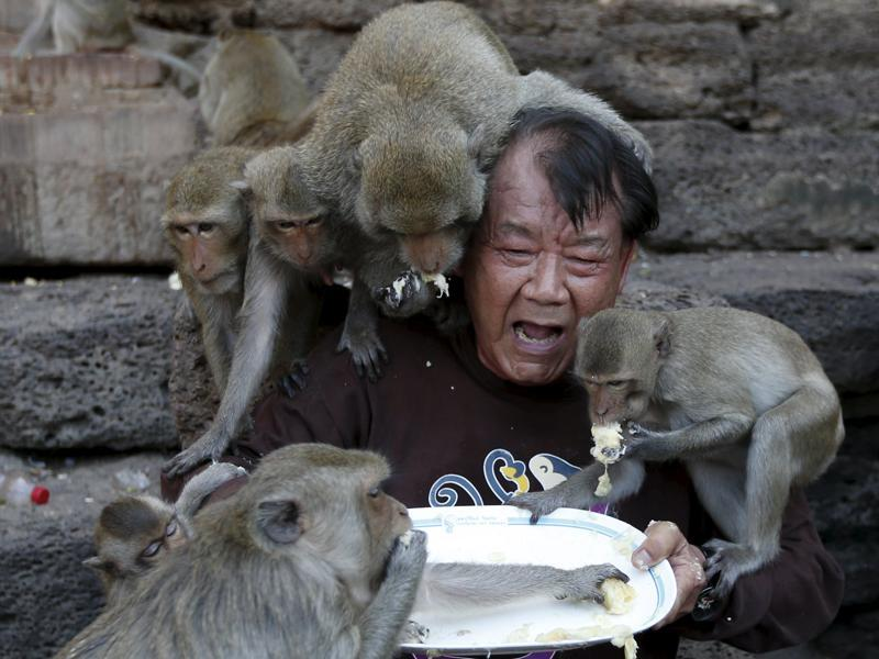 Long-tailed macaques eat fruits from a plate held by festival organizer Yongyuth Kitwattananusorn during the annual Monkey Buffet Festival at the Pra Prang Sam Yot temple in Lopburi, north of Bangkok, Thailand November 29, 2015.  (REUTERS)