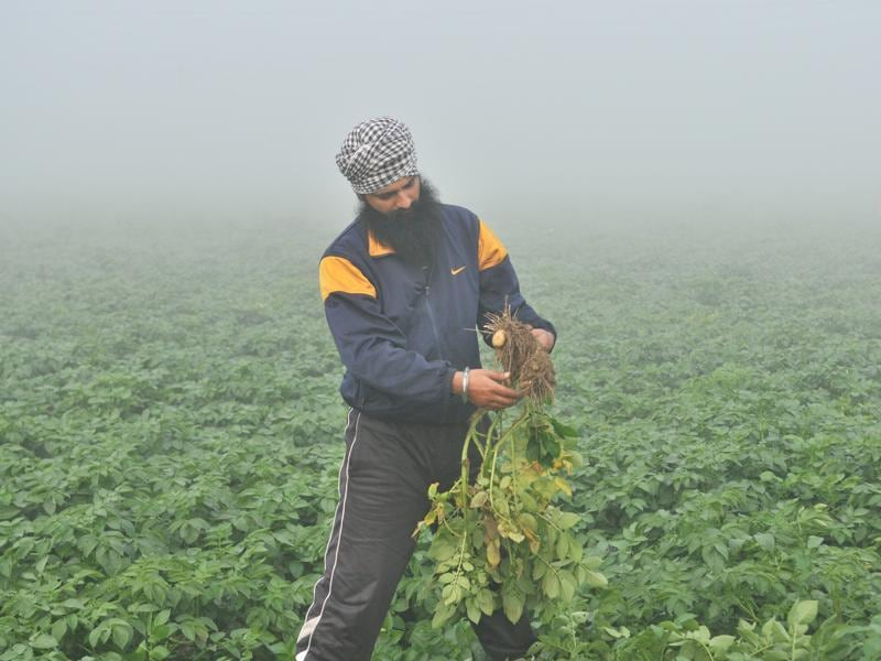 A farmer in the field even as dense fog engulfs Talhan village near Jalandhar on Tuesday. (Pardeep Pandit/HT Photo)