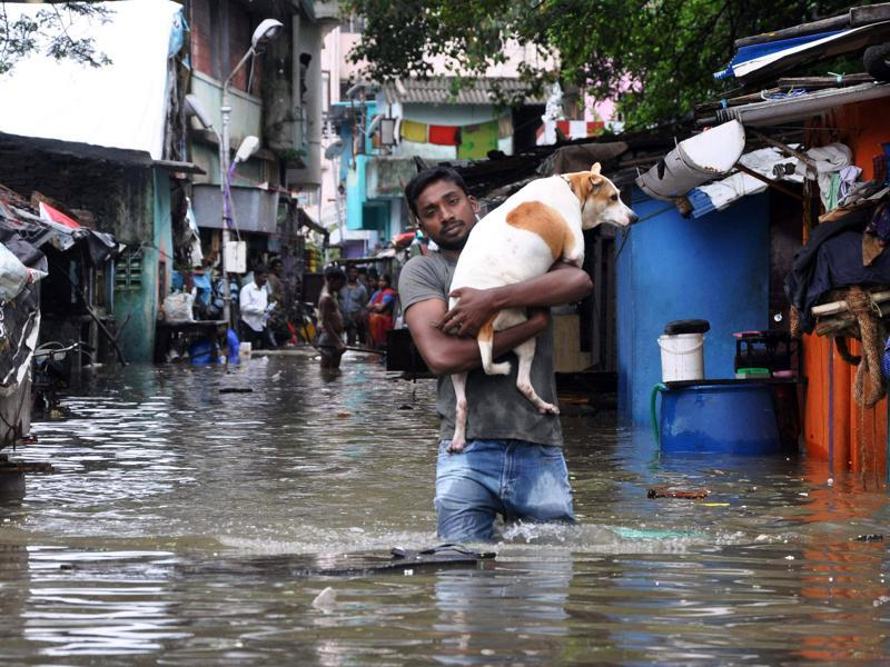 A man carries a dog and wades through a flooded street in Chennai. (AP)