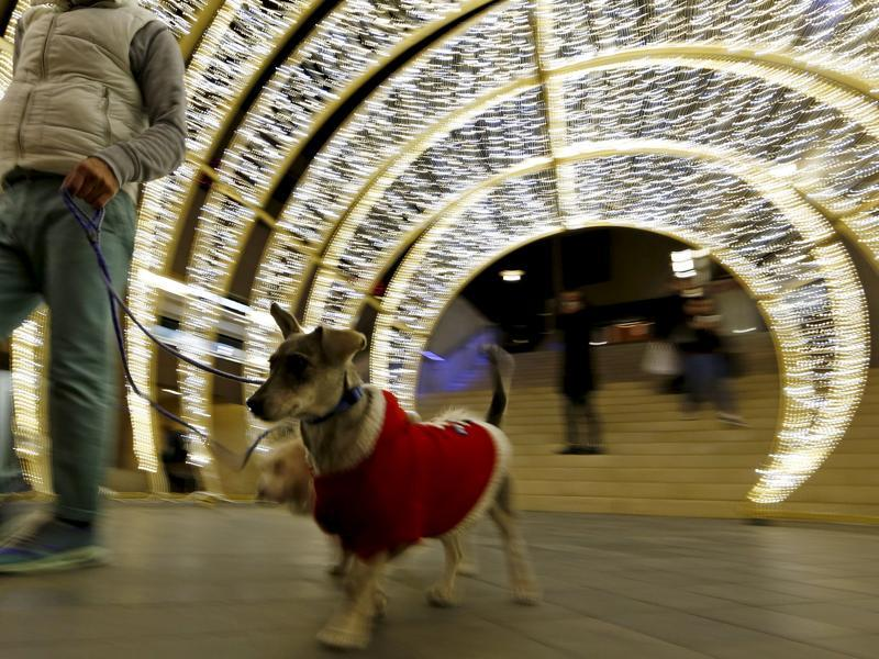 Lebanon has a long association with Christianity beginning from the time Jesus visited areas in south Lebanon. A man walks a dog dressed in Christmas costumes near Christmas decorations in downtown Beirut, Lebanon December 5, 2015.  (REUTERS)