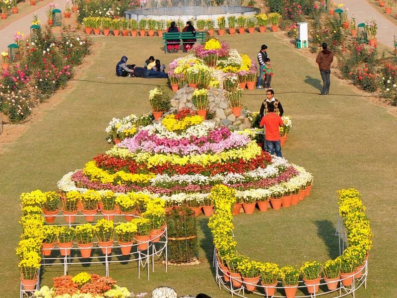 Along with the many varieties of chrysanthemums,  2,700 potted plants and 25 types of flower arrangements are also on display at the show.    (Ravi Kumar/HT Photo)