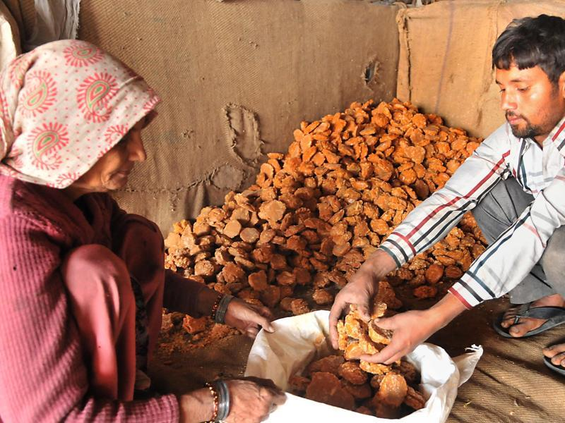 The jaggery is now ready to be sold in the market.  (Pardeep Pandit/HT Photo)