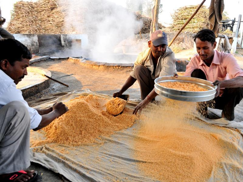 The crushed jaggery is then sieved and 'Shakkar' is ready to be sold and savoured with 'Makki di roti' and 'sarso da saag'. (Pardeep Pandit/HT Photo)