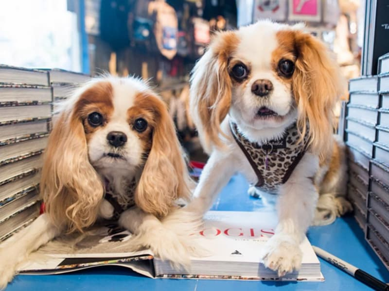 Rosie & Ruby, Cavalier King Charles Spaniels (10 & 12 y/o)  with The Dogist book, a compilation of the photographer Elias Weiss Friedmann's photographs of over 1000 dogs. (TheDogist/Instagram)