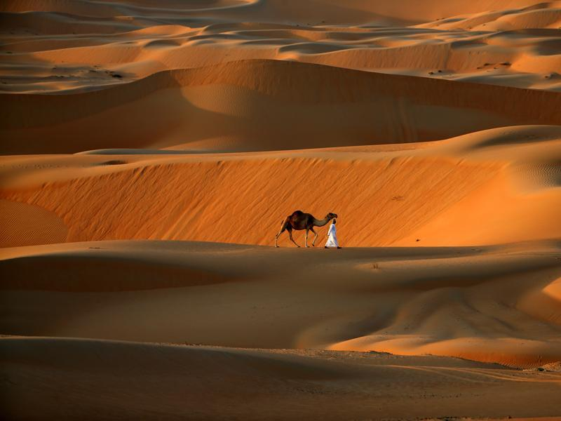 A man walks his camel across the Liwa Oasis, southwest of the Emirati capital, Abu Dhabi, on December 20, 2015.  (AFP)