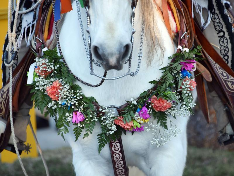 A horse is adorned with flowers in the 127th Rose Parade in Pasadena, California, January 1, 2016. (AFP)