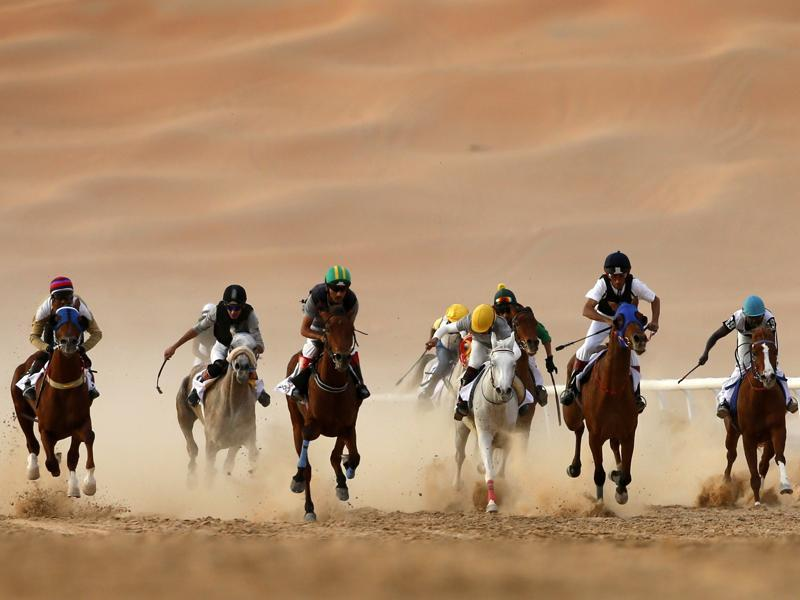 Purebred Arab horses taking part in a race during the festival.  (AFP)