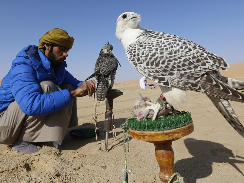 Another falconer with his pets during the festival.  (AFP)