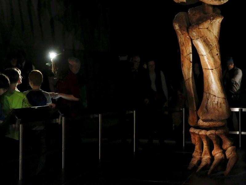 The titanosaur's remains were excavated in the Argentinian desert near La Flecha by a team from the Museum of Paleontology Egidio Feruglio, led by José Luis Carballido and Diego Pol, who studied at the New York museum.  (Reuters Photo)