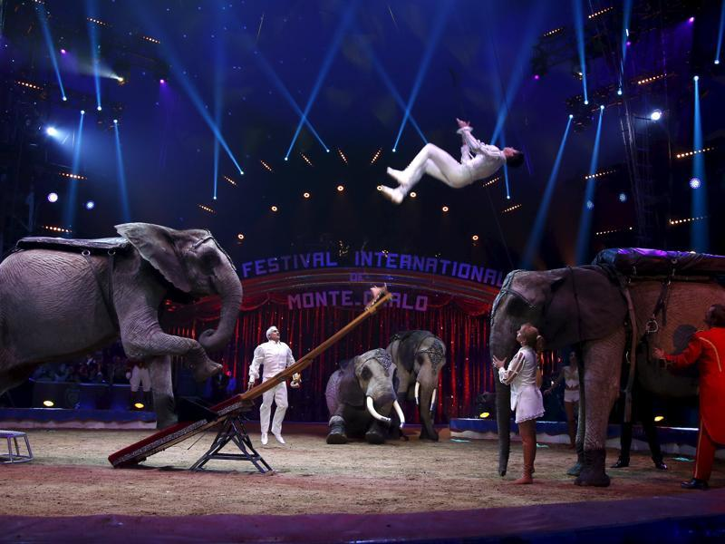 The Cassely family and their African elephants perform during the opening of the festival in Monaco January 14, 2016. (REUTERS)