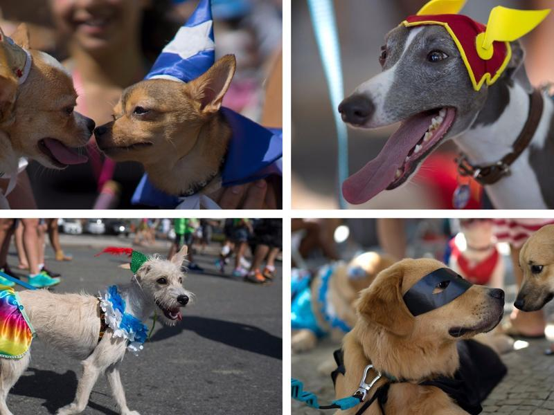 Dogs in costume (one of them dressed as The Flash), interact during a carnival pet parade in Rio de Janeiro, Brazil, Sunday, January 31, 2016. People dressed their pets up for the annual block parade held near Copacabana beach. (AP)