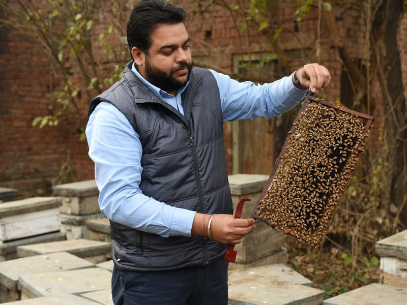 Simranjeet Singh with his honey bees at Ugani village in Patiala.   (Sanjeev Sharma/HT Photo)
