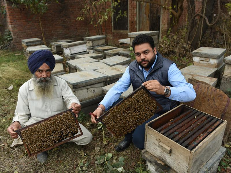 Simranjeet Singh (right) with his uncle  showing off their honey bees at Ugani village in Patiala. (Sanjeev Sharma/HT Photo)