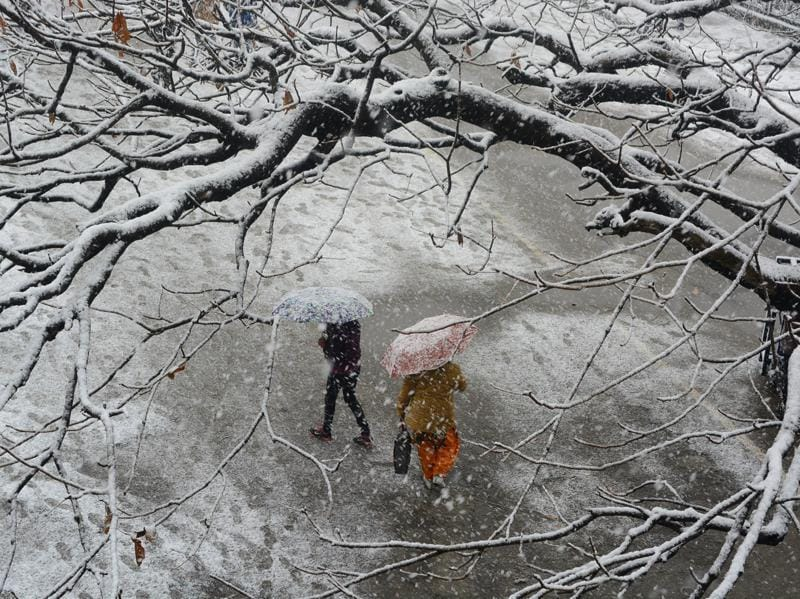 People cross from under a tree during heavy snowfall in Shimla on Sunday. (Deepak Sansta / Hindustan Times)