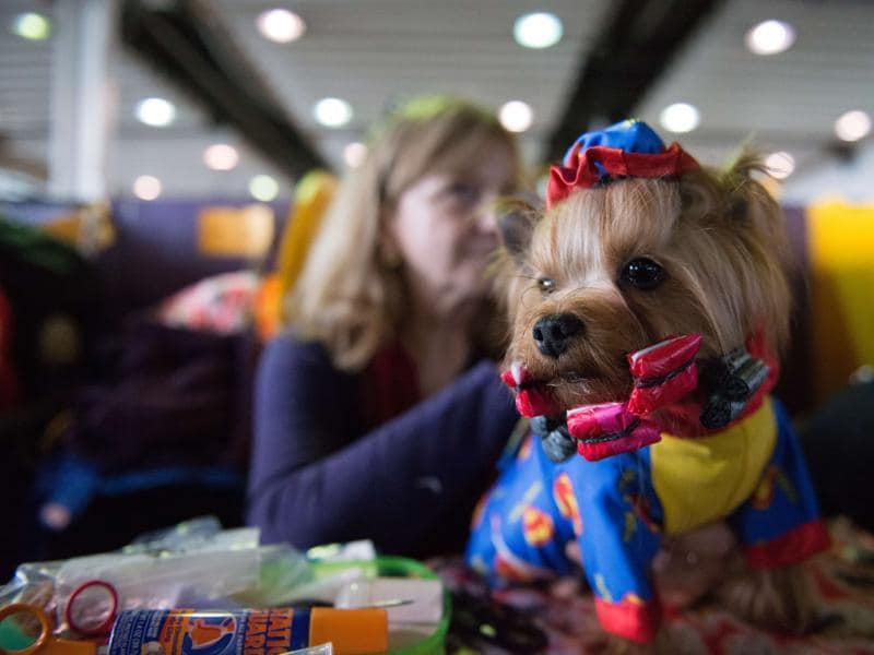 A woman sits with her dressed up Yorkshire Terrier.  (AFP)