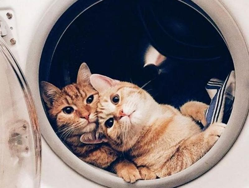 "The photographer chose to caption the photo of these adorable cats in a dryer as: ""As you get older you find out that true happiness is not in how much you make or how many degrees you have or how big your house is or how fancy your car is. It is finding joy and a calmness in your life that will soon become the most important thing to you. "" (Instagram/shennyfaith)"