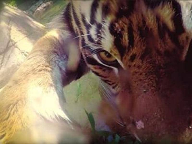 A zoo in Los Angeles has  teased the release of a series of Animal selfies in collaboration with Google and Disney.  (Instagram/@thelosangeleszoo )