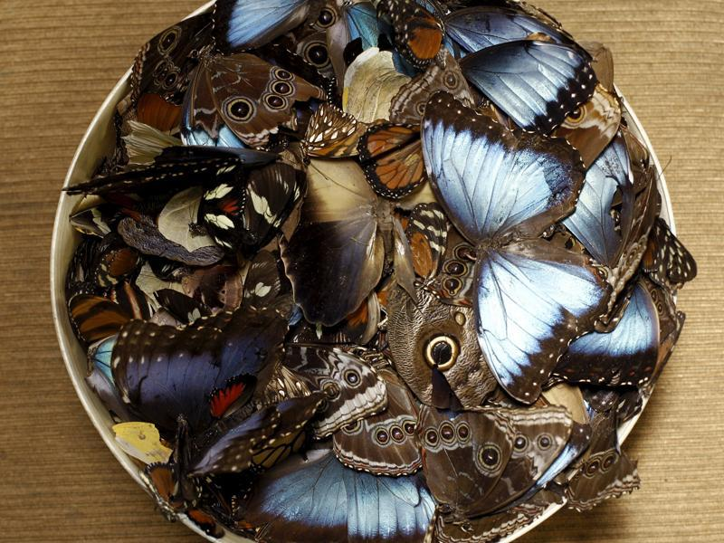 A bowl of dead butterflies seen here before getting transformed into items of art.  (REUTERS)