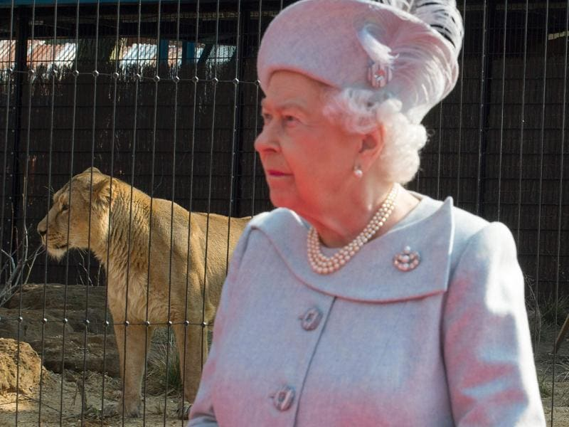Britain's Queen Elizabeth II is pictured as she attends the official opening of 'The Land Of The Lions' exhibit at London Zoo. (AFP Photo)