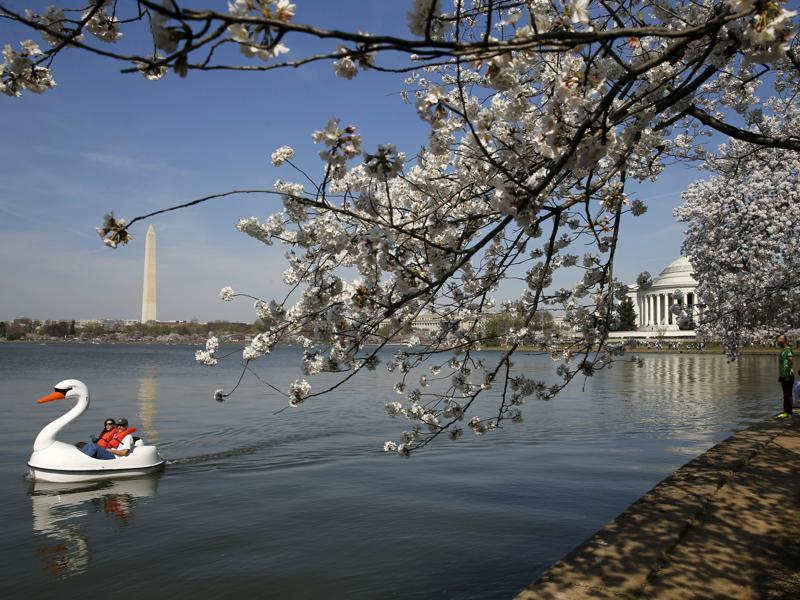 People paddle a swan-shaped boat as visitors walk along the Tidal Basin.  (REUTERS)