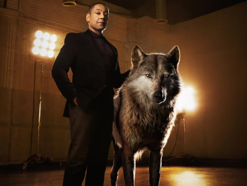 """Akela is a fierce patriarch of the wolf pack,"" says Giancarlo Esposito, who voices the character. ""He believes the strength of the pack lies in what each and every wolf offers. He's a great leader, a wise teacher."" (Disney)"