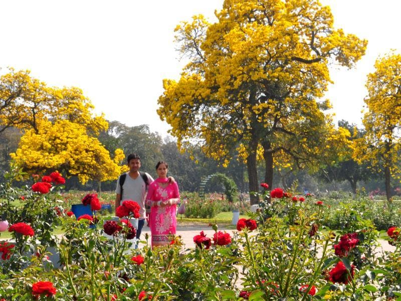 Spring spells a riot of colours in Chandigarh. (Karun Sharma/HT)